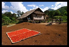 Drying Chili Peppers | Village near Tadlo Falls | Laos