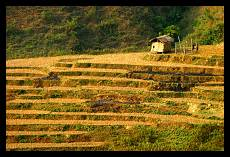 Cottage in the Rice Field | Ha Giang Province | Vietnam